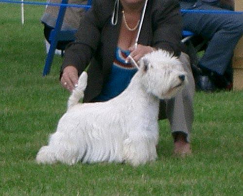 Limit Class At A Dog Show